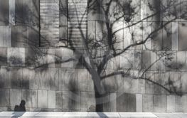 Shadow of a man and a tree on a modern wall