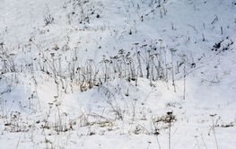 Winter glade with snow