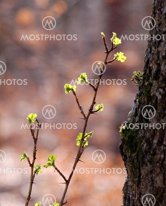 Spring twig