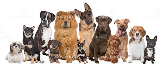12 Koirien ryhmän