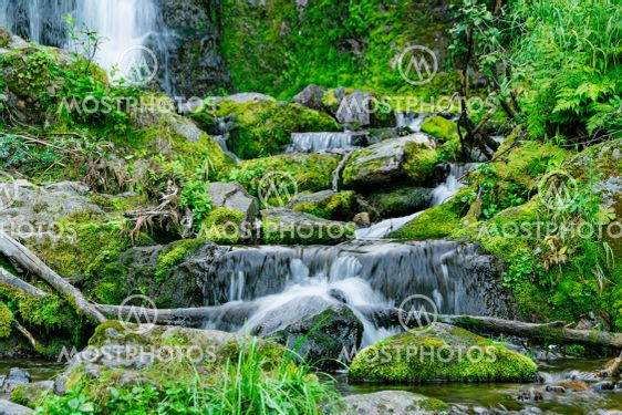 Forest stream in rainforest. Waterfall among mossy rocks...