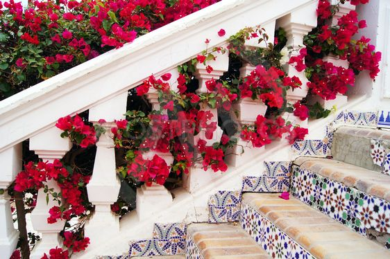 Stairs and bougainvillea