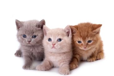 Three kittens on a white background