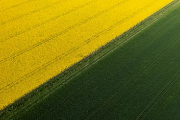Aerial view of yellow canola vegetable oil field