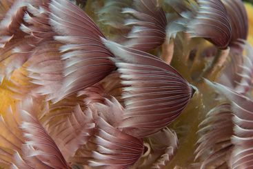 Feathers in the Ocean