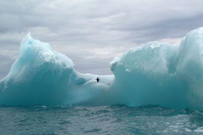 Pingvin på isberg