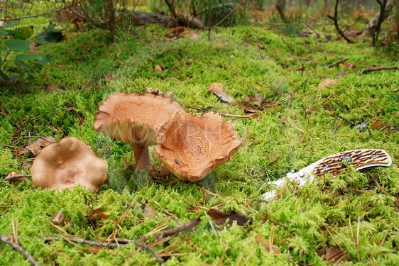Svamp i skogen