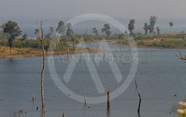 dead trees in the reservoir with blue sky - Thakhek Loop