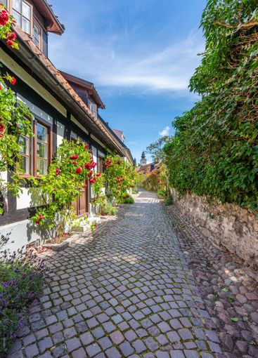 Smal kullerstensgata med rosen buskar i Visby.
