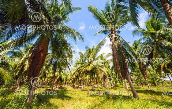 Dense Jungle Scene