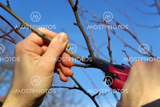 Baum verschneiden 09