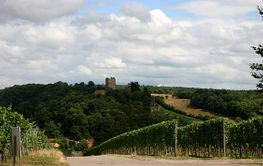 vineyards with castle