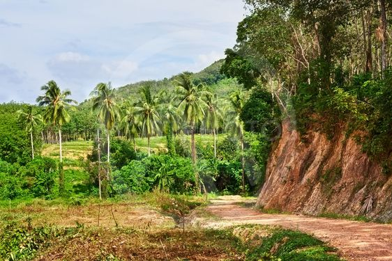 Road Jungle