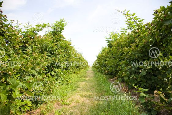 U pluk Berry Farm
