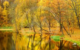 Colorful forest scene in the fall with orange and yellow...