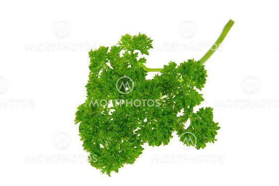 Petersilie - parsley 07