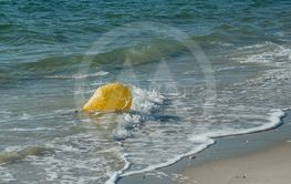 yellow buoy in the water oin the beach