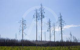 Hälleskogsbrännan 2019:13