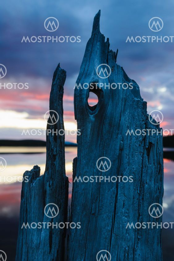Drift wood in front of lake during sunset