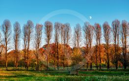 Moon over the trees in autumn