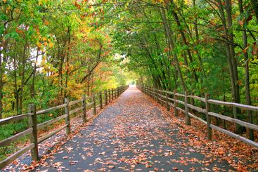 long wooded trail