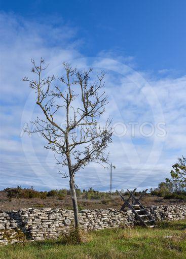 Stenmur vid gränsen mellam lund och alvar i Albrunna på...