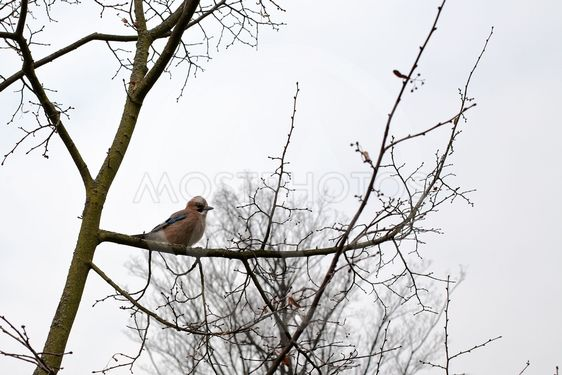 small bird on tree branch
