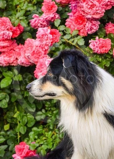 Bon Bon in flowers