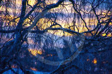 vinter solnedgång