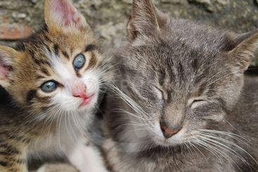 Mother cat with her son