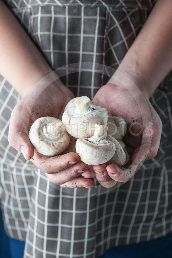 champignons in hands