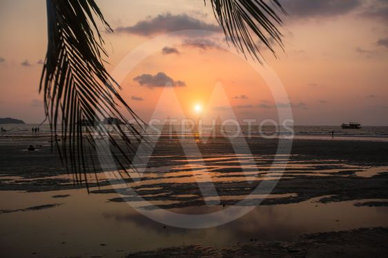 Sea beach through palm leaves during amazing Sunset.