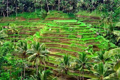 Rice plantation terrace