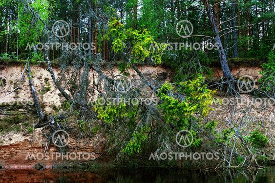 wild forest river