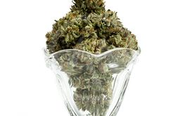 Serving of cannabis sativa