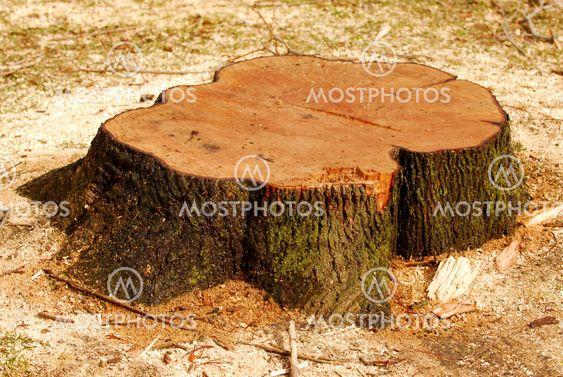 Trädet stump