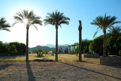 palm trees in desert in egypt