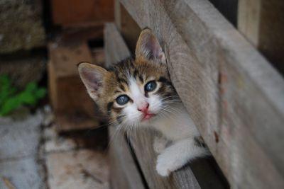 A simpatic cat 2