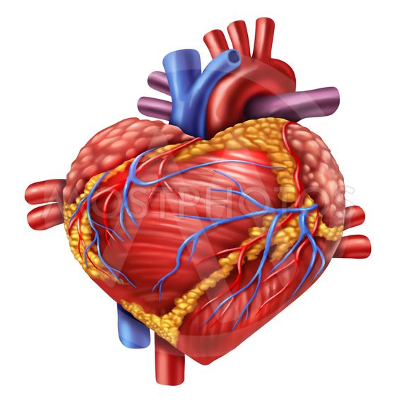 Ihmisen Sydän