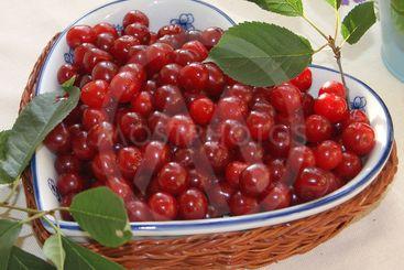 Freshly picked cherries in wicker basket bowl