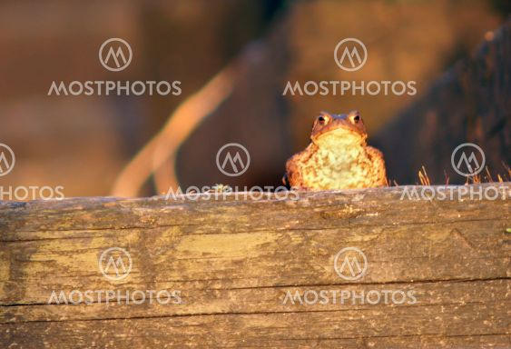Good Morning Toad I
