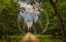 Väg i skogen