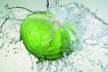 cabbages and water splashing