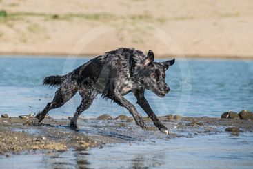 Dog on water photo workshop.