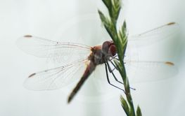 dragonfly with transparent wings standing on...