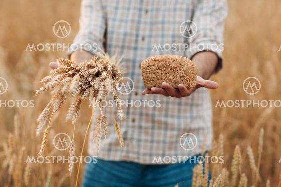 Man farmer holds sheaf of wheat ears and bread in cereal...