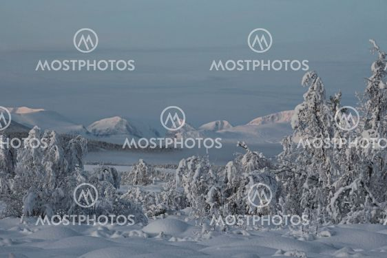 Snötyngda träd och Kebnekaise