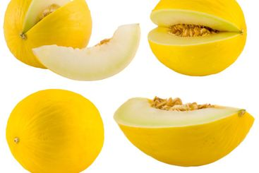 yellow melons collection