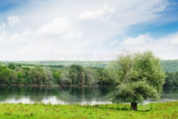 meadow and forest  on the banks of the River