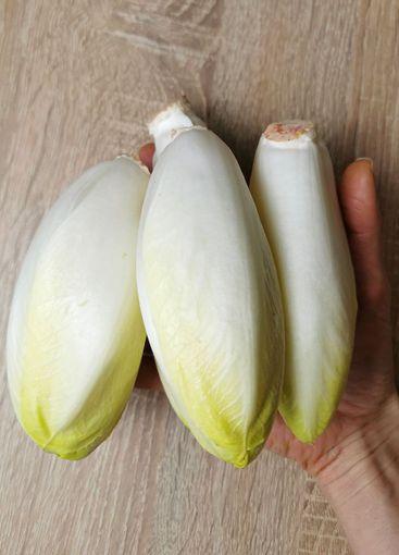 Chicory, endive, succory. Witlof vegetable